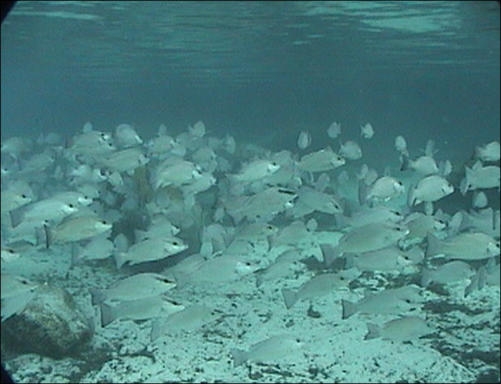 Florida vacation spots crystal river homosassa cedar key for Best fishing spots in florida